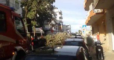 L'albero caduto in Viale Adige