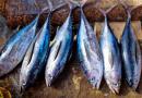 Decreto Sostegni: Alleanza Cooperative, la pesca grande assente