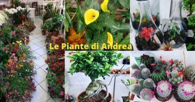 Le Piante di Andrea, quando la botanica diventa arte