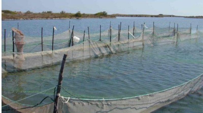 Pesca, rinnovato il contratto nazionale per i lavoratori non imbarcati